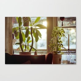 Morning Winter. Canvas Print