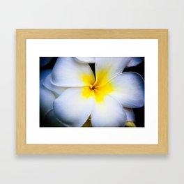 Hawaian Flower - A Plumeria Framed Art Print