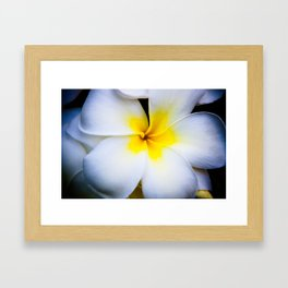 Hawaian Flower - A Plumeria Framed Art Print