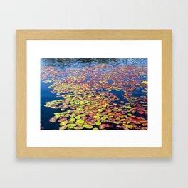 Lilly Pads Framed Art Print