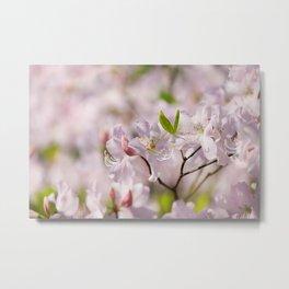 Stem of pink Rhododendron Metal Print