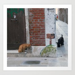 Cat and Dog, Venice, Italy with Graffiti and Venetian alley Art Print