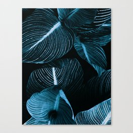 Unbridled - teal Canvas Print