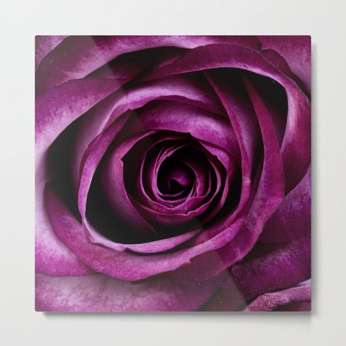 Aubergine Rose Metal Print