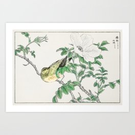 Brown-eared Bulbul and Rosa Rugosa illustration from Pictorial Monograph of Birds (1885) by Numata K Art Print