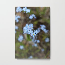 3 Forget-Me-Nots in the Center Metal Print