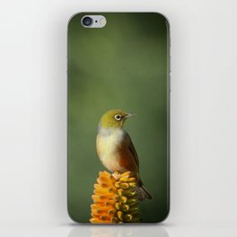 Silvereye Queen iPhone Skin