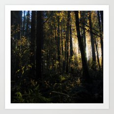 An Impression of Noble Woods at Sunset Art Print