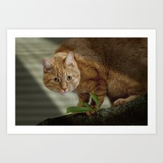Cat out on a Limb Art Print