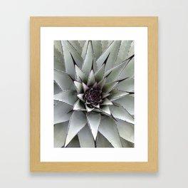 Cactus Flower in Nature Framed Art Print