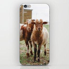 Counting Sheep iPhone Skin