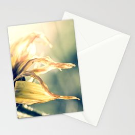 Tranquil Stationery Cards