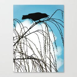 Cawing Crow Canvas Print