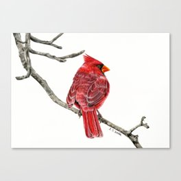 Winter Cardinal On White Canvas Print