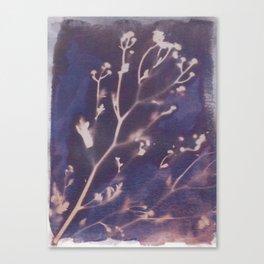 Cyanotype No. 12 Canvas Print