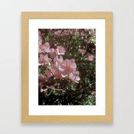Happy Little Pink Flowers Framed Art Print