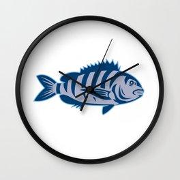 Sheepshead Fish Isolated Retro Wall Clock