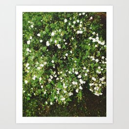 Spring is coming! Art Print