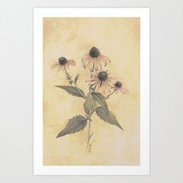 Blackeye Susan Art Print