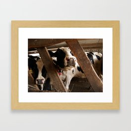 MOOO Framed Art Print