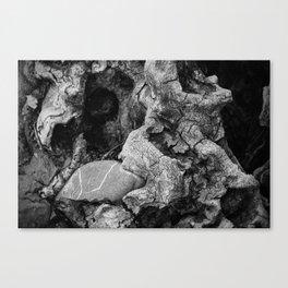 Cradled Stone Canvas Print