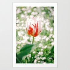Light & Bright Art Print