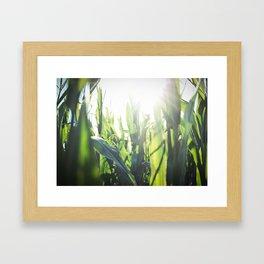 Corn Framed Art Print