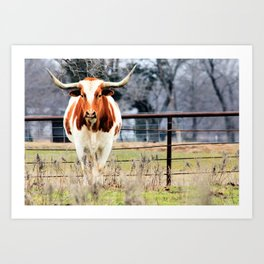 Texas Longhorn Morning Art Print