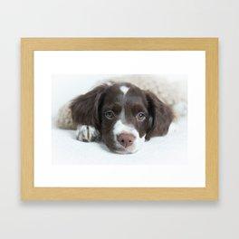 Brittany Puppy Framed Art Print