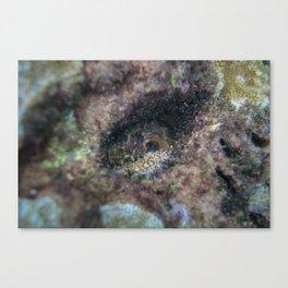 Octopus Hiding Canvas Print