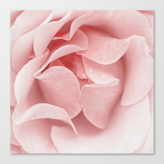 Pink flora Rose Bud- Roses and flowers Canvas Print