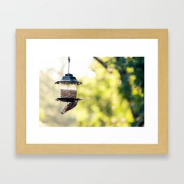 bird eating Framed Art Print