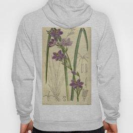 Orthrosanthus chimboracensis 143 8731 Hoody