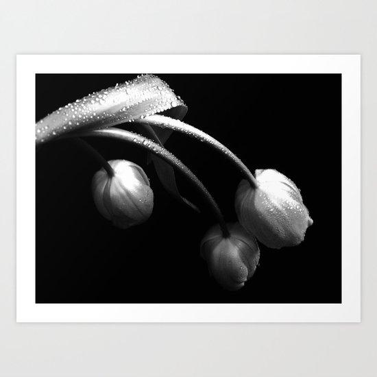 Brilliant Tulips Art Print