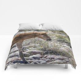 Salt River Wild Foal Comforters