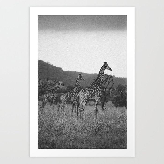 Kaleidoscope of Giraffes Art Print