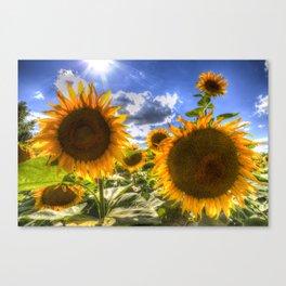 Sunflowers Of Summer Canvas Print