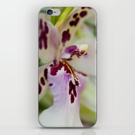 Orchid Cambria 8022 iPhone Skin