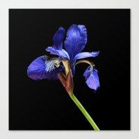 iris Canvas Prints featuring Iris by Artemio Studio