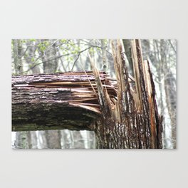 Broken Tree Canvas Print
