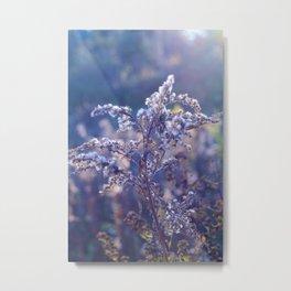 Dreaming of fields.  Metal Print