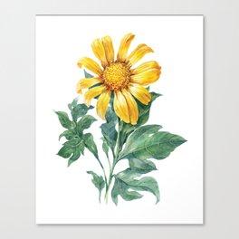 Vintage Yellow Daisy on White Canvas Print