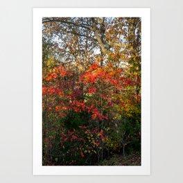 Autumn Colors Along the Natchez Trace Art Print