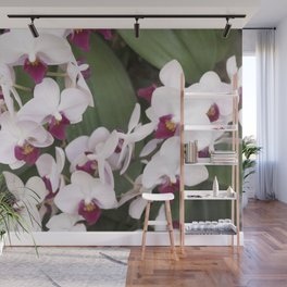 Longwood Gardens Orchid Extravaganza 1 Wall Mural