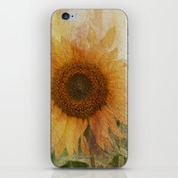 sunflower iPhone & iPod Skins featuring sunflower by VanessaGF