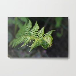 Fiddle fern Metal Print