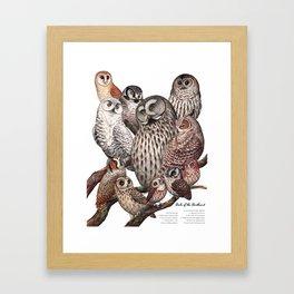 Owls of the Northeast Framed Art Print