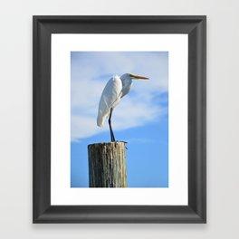 Perching White Egret Framed Art Print