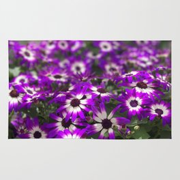 Cineraria Flower Rug