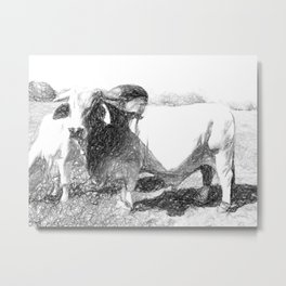 Brahman Bulls sketch Metal Print